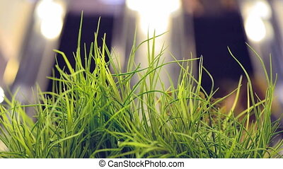 spring grass at escalator motion background - green spring...