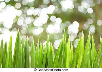 Spring grass in sun light.