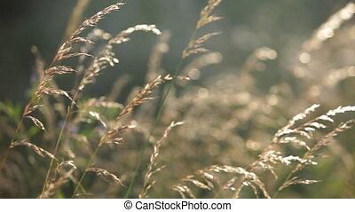 Spring grass in the wind. close up