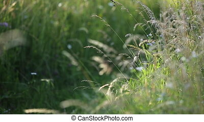 Spring grass in the wind