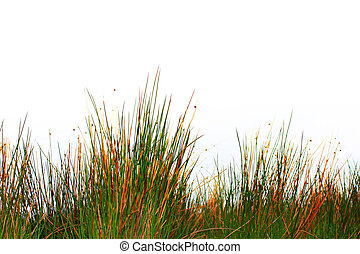 Spring grass isolated
