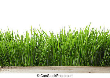 Spring grass on white