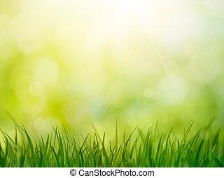 Spring grass. Blur background. Summer nature. Bokeh blurred...