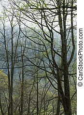 Spring, Great Smoky Mountains National Park, TN