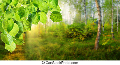 Spring Green Background with Forest