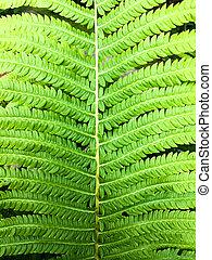 Spring green fern