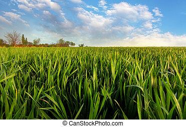 Spring Green field