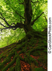Spring green forest at Gorbea Natural Park