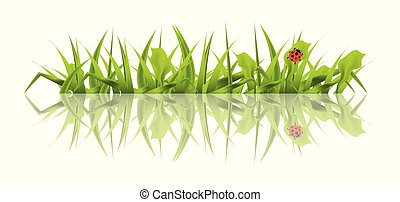 Spring Green Grass with Ladybug Isolated on White Background.