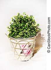 Spring green house plant in a white metal pot on white shelf and