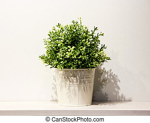 Spring green house plant in a white metal pot on white shelf