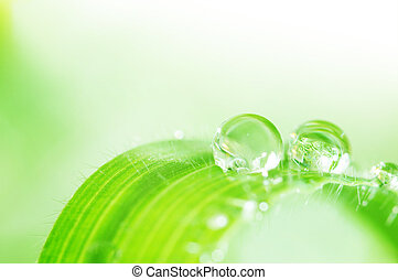 spring green leaf with water drops
