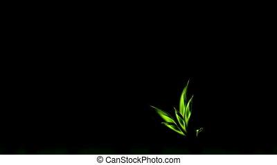 Spring, Green Leaves Growing, Flora