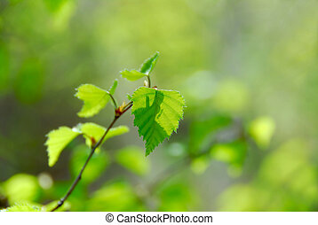 Spring green leaves