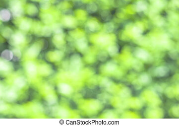 Spring green with bokeh and sunlight background
