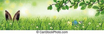 Spring Hare Easter Eggs Grass Beech Twigs Header