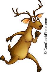 spring, hjort