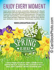 Spring holiday vector poster of daffodils bouquet