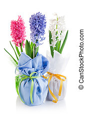 spring hyacinth flowers with green leaves in textile wrapping