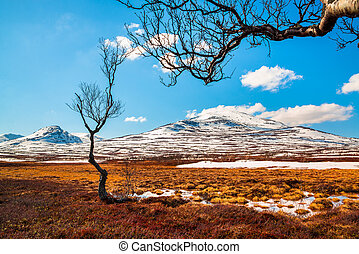 spring image from the Swedish mountains