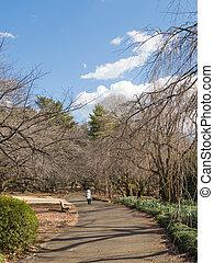 Spring in a Japanese garden
