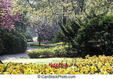 Spring in blooming park