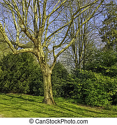 Spring in British park with old dry tree