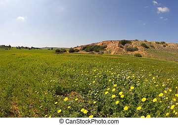 Spring in desert. A grass and flowers