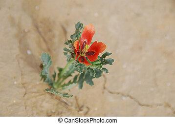 Spring in desert