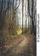 spring in forest path