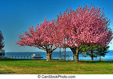Spring in Maryland - Spring trees on the Chesapeake Bay...