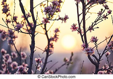 Spring in nature