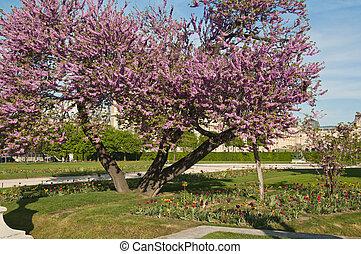 Spring in Paris. France