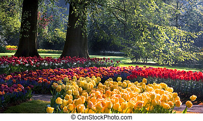 Spring in park with colorful tulips