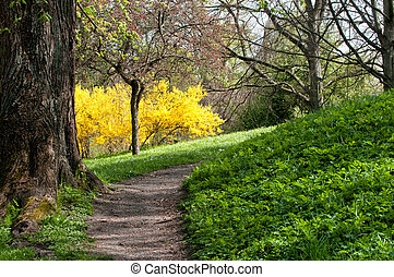 Spring in Sweden - Flowering broom and a footpath through a...