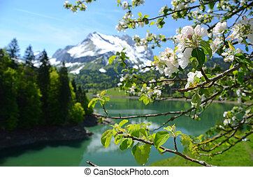 Spring in Switzerland