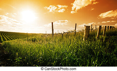 Spring in the Barossa Valley - Barossa Valley sunset in the ...