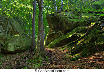 Spring in the forest - Spring landscape in the forest. Moss...