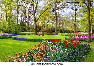 Spring in the park