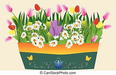 Spring in the pot, - composition with colorful, blooming...