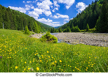 Spring in Ukraine in the mountains