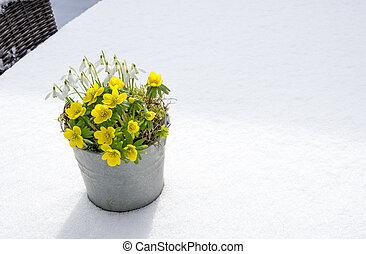 spring., inverno, sinais, snowdrops, aconite, primeiro