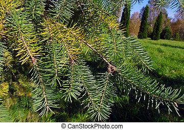 spring., jardin, arrière-plan vert, impeccable, branches