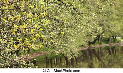 spring landscape abstract green background