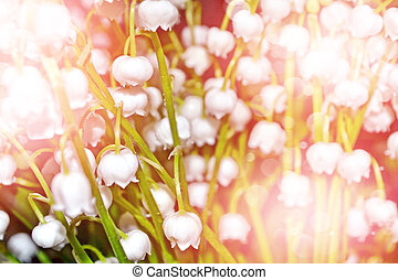 flowers lily of the valley