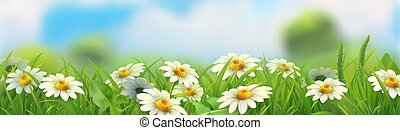 Spring landscape. Green grass and chamomile. 3d vector horizontal panorama