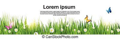 Spring Landscape Green Grass Flower Butterfly Land Banner...