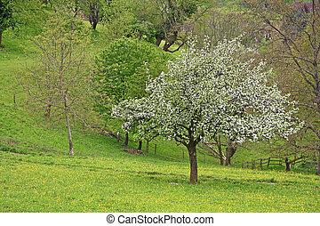 Spring landscape in Germany
