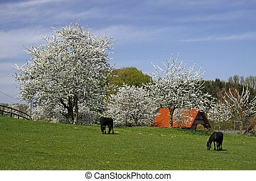 Spring landscape in Germany