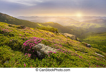 Spring landscape in mountains with Flower of a rhododendron